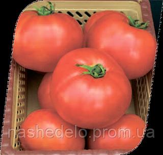 Семена томата Элегро F1 1000 семян Seminis