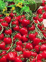 ЯГОДО F1 / YAGODO F1 - Томат индетерминантный, Semo, 100 семян