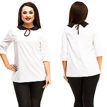 """Стильная женская блуза """"NINELLE"""" с контрастным воротничком (большие размеры), фото 3"""