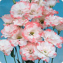 Свадебный букет доставка цветов донецк розита цветов конфет корзине