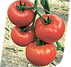Семена томата Мелодия F1 500 семян Seminis