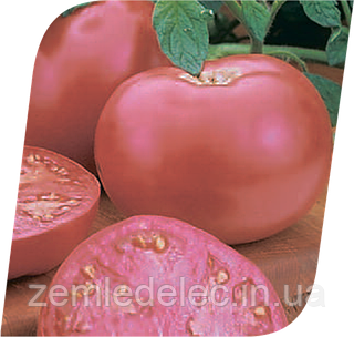 Семена томата Пинк Леди F1 500 семян Seminis