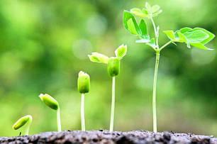 Добрива, стимулятори росту