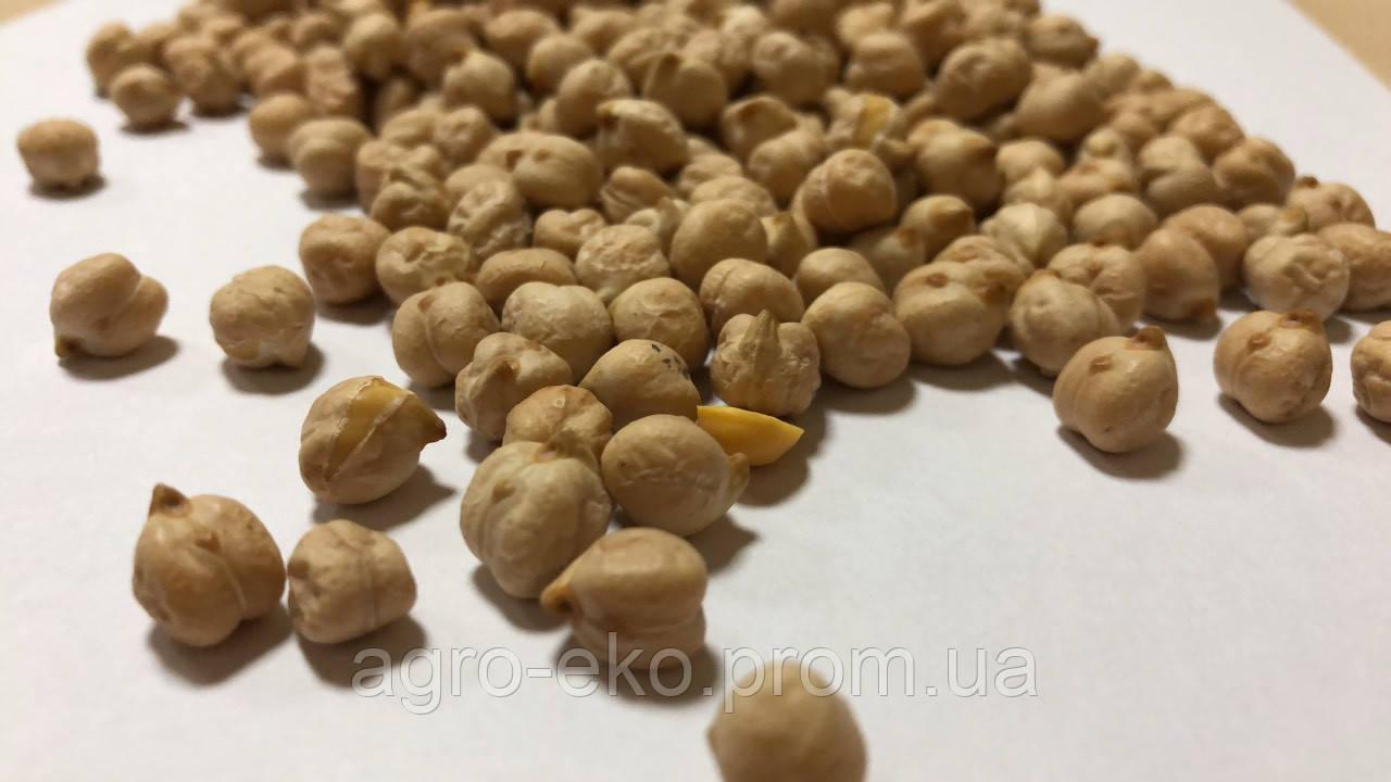 Семена Нута Бар (Bar Israel)