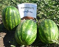 Сладкий гибрид арбуза Каристан F1 Syngenta, Семена почтой профессиональная упаковка 1 000 семян