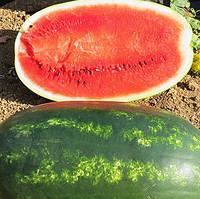 Профсемена гибрид арбуза Мирсини F1, Syngenta 1 000 семян, Для выращивания в открытом и закрытом грунте