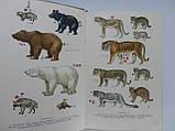Бобринский Н.А. и др. Определитель млекопитающих СССР (б/у)., фото 9