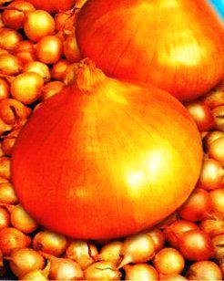 Семена лука Марковский