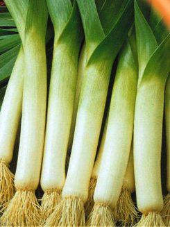 Семена лука Порей Болгарский гигант, фото 2