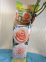 Саженцы розы Примадонна