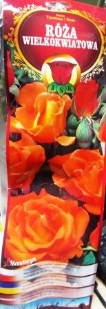 Троянда великоквіткова Mandaryn