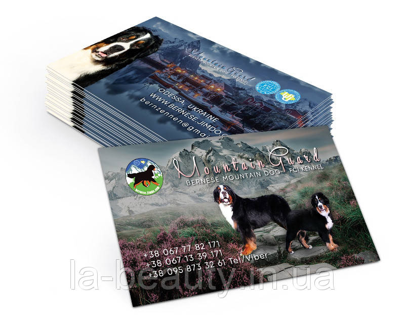 Дизайн визиток питомника собак (Бернский зенненхунд)