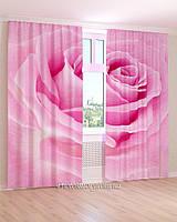Фотошторы макро розовая роза