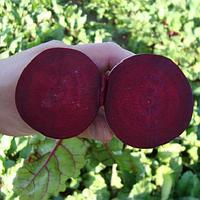 Ларка (Larka) насіння буряка столового округлого середнього калібр. PR Rijk Zwaan 100 000 насінин