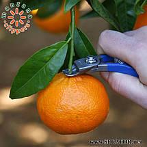 Кусачки для збору яблук Manzana М14L-AM (Іспанія), фото 3