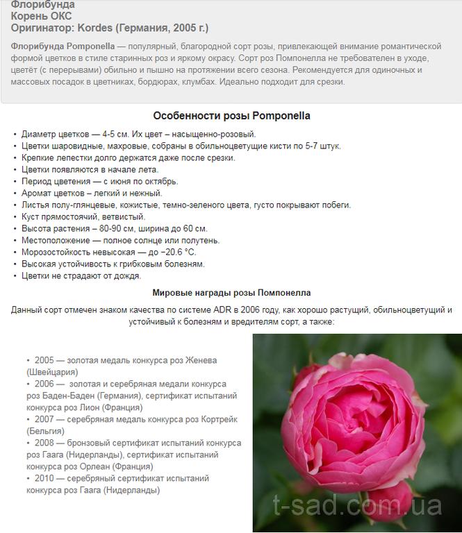 Примеры наполнения сайтов на Prom.ua 1
