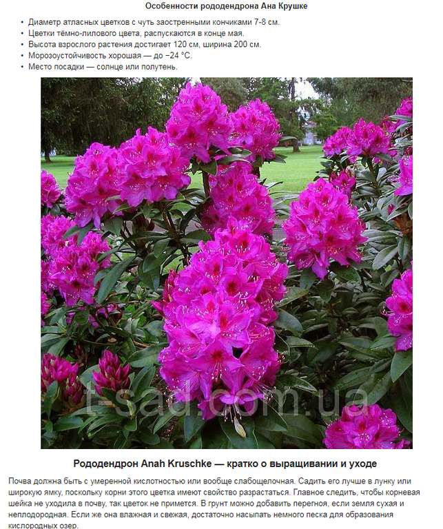 Примеры наполнения сайтов на Prom.ua 3