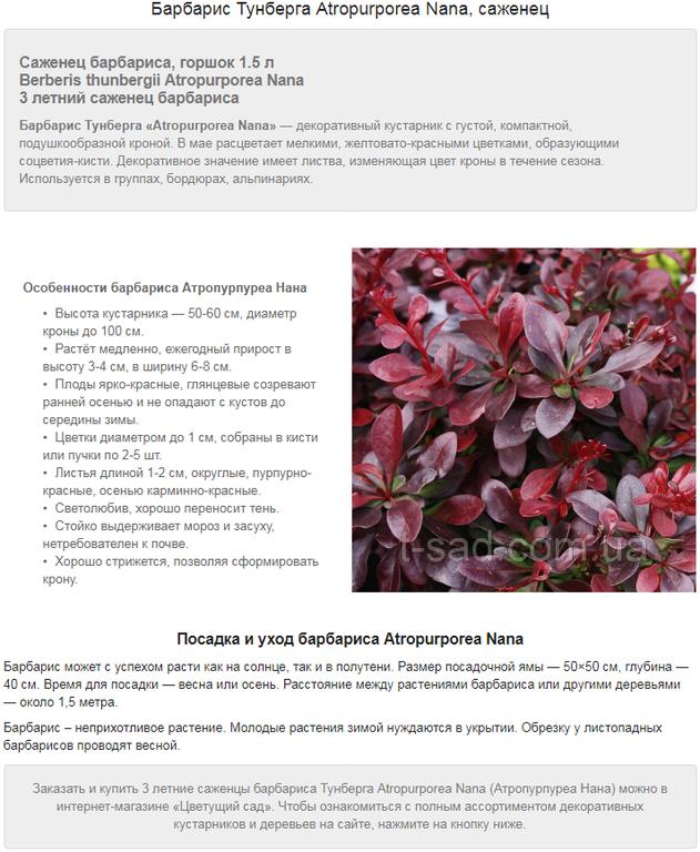 Примеры наполнения сайтов на Prom.ua 4
