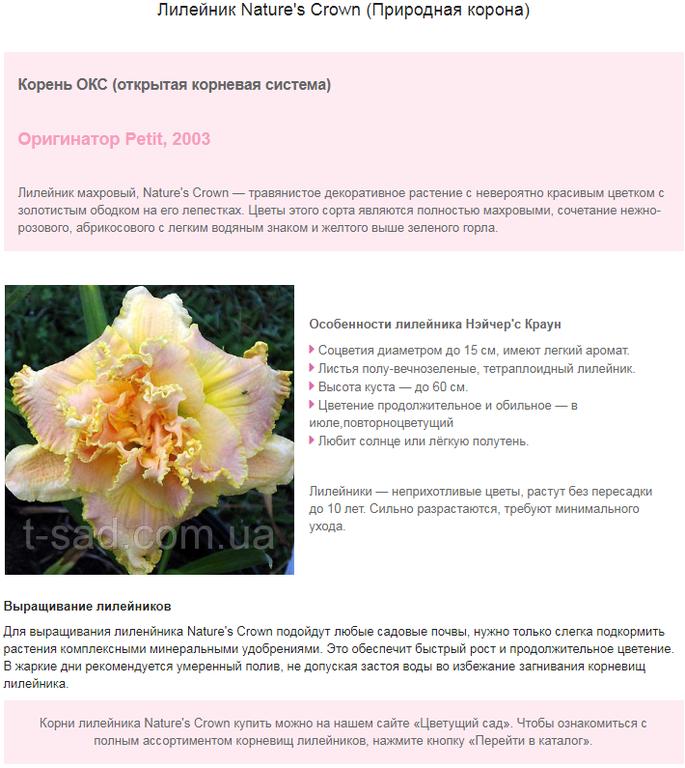 Примеры наполнения сайтов на Prom.ua 7
