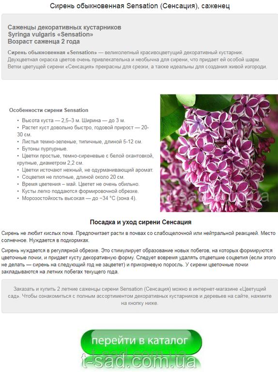 Примеры наполнения сайтов на Prom.ua 8
