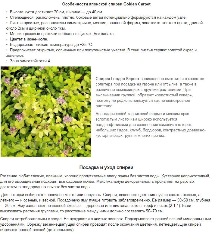 Примеры наполнения сайтов на Prom.ua 5