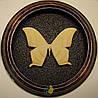 Сувенир - Бабочка в рамке Asthenidia buckleyi. Оригинальный и неповторимый подарок!