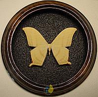 Сувенир - Бабочка в рамке Asthenidia buckleyi. Оригинальный и неповторимый подарок!, фото 1