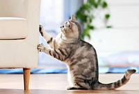 Как отучить кошку драть мебель и обои?