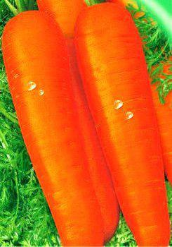 Семена моркови Перфекция 25 г, фото 2