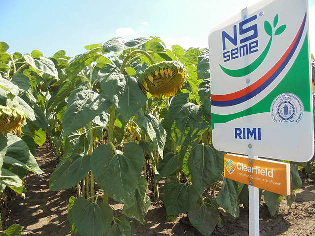 Семена подсолнечника Рими стандарт Clearfield (Евро-Лайтнингу); п. в. 112 дн. высокоурожайный, 150000 сем., фото 2