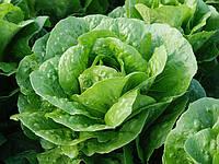 БАЦИО / BACIO – салат, Enza Zaden 5 000 семян