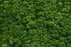 """Стабілізований мох """"Ягель"""" натуральний зелений 1кг"""