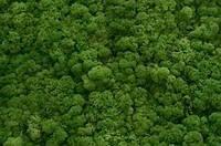 """Стабілізований мох """"Ягель"""" натуральний зелений 1кг, фото 1"""