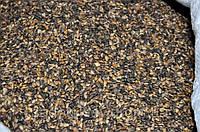 Насіння сосни звичайної, семена сосны обыкновенной