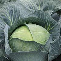 Семена капусты б/к Саксессор F1 (2500 сем.), фото 1