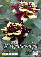 Абракадабра вьющаяся класс А, бордово-желтая