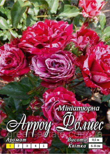 Арроу Фолиес бордюрная класс АА-Премиум красная с белыми полосками