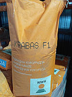 Семена гибрида кукурузы Крабас укр (ФАО 300)