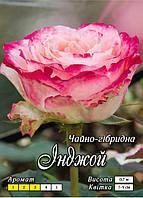 Инджой класс АА-ПРЕМИУМ, белая с розовым ободком