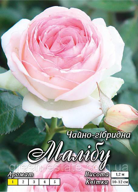 Малибу Ч/Г класс А, бело-розовая