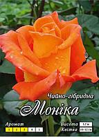 Моника Ч/Г класс А, оранжевая