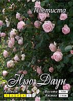Нью Даун кучерява клас А, рожева
