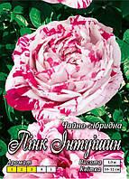 Пинк интуишн класс АА ПРЕМИУМ, белая с розовым