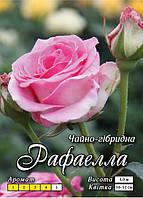 Рафаелла клас А, рожева