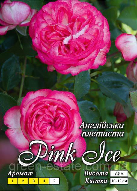 Розовый лед английская махровая класс А