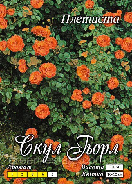 Скулгел вьющаяся морковная класс А, оранжевая