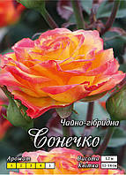 Сонечко класс А, оранжевая с бордо