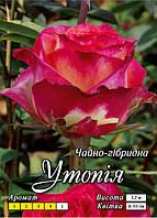 Утопия класс А, розовый с белым