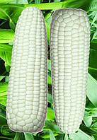 Семена Кукуруза сахарная Белоснежка  20г ( пакет-гигант), ТМ Урожай