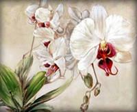 Набор алмазной вышивки Белая орхидея